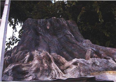 擬木サムネイル
