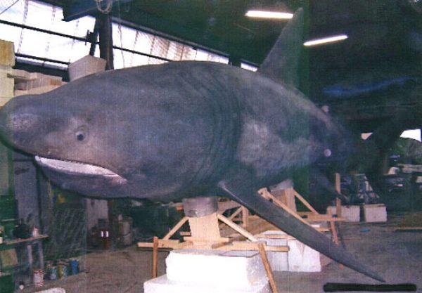 美ら海水族館ウバザメ