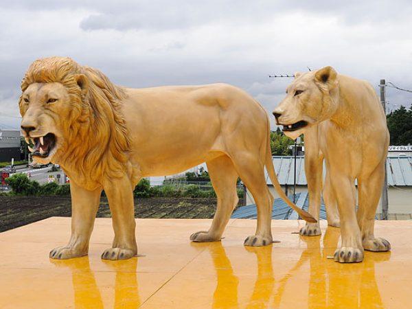 ライオン オス・メス