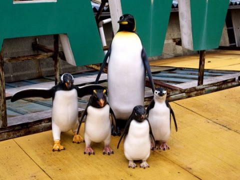 ペンギンサムネイル